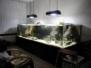 Akwaria biotopowe