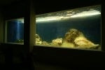 Akwarium Juana Moliny