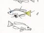 Galeria rysunków ryb