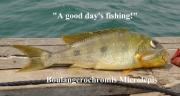 Boulengerochromis microlepis podstawa wyżywienia rybaków