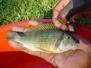 Ryby, które możemy zamówić!!!